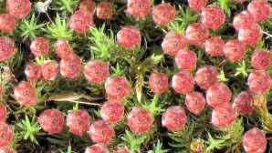 Sammal kukkii