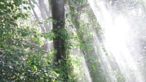 Auringon valo loistaa sateessa puiden välistä