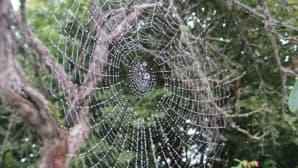 Hämähäkinseittiä
