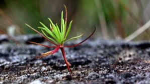 Uutta kasvillisuutta maaperästä