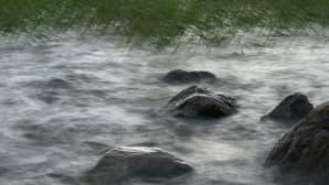 Myrskyä järven rannassa