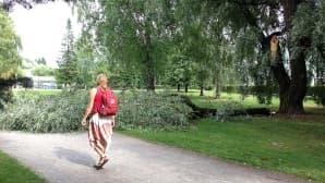 Katkennut oksa puiston jalkakäytävän päällä