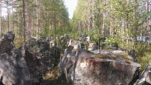 Panssariestettä metsässä.