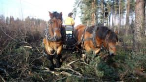 Tarmo ja Tarsan puusavotassa