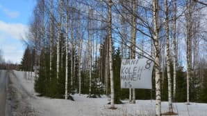 Perussuomalaisten Jani Kolehmaisen vaalilakana kiinnitettynä puiden väliin tien reunassa.