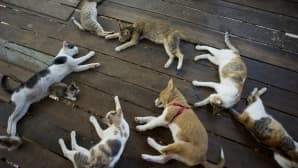 Kissoja ja koira eläinten turvakodissa Yangonissa, Myanmarissa. Turvakodissa on yli 200 kaupungin kaduilta pelastettua eläintä.