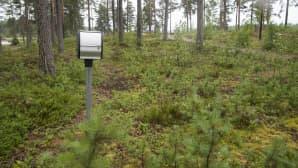 sähkötolppa metsässä