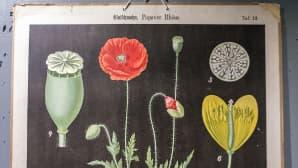 Kasveja opetustaulussa.