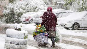 Nainen kuljetti tekokukkia lumipyryssä Chișinăussa, Moldovassa 20. huhtikuuta.