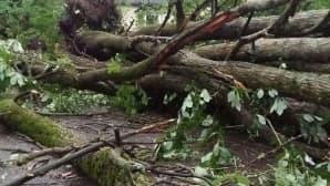 Kaatunut puu Pirkkolassa Helsingissä.