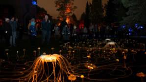 Annie Mitchellin The Forest Rises -teoksessa pääosassa ovat väriä vaihtavat UV-meduusat.