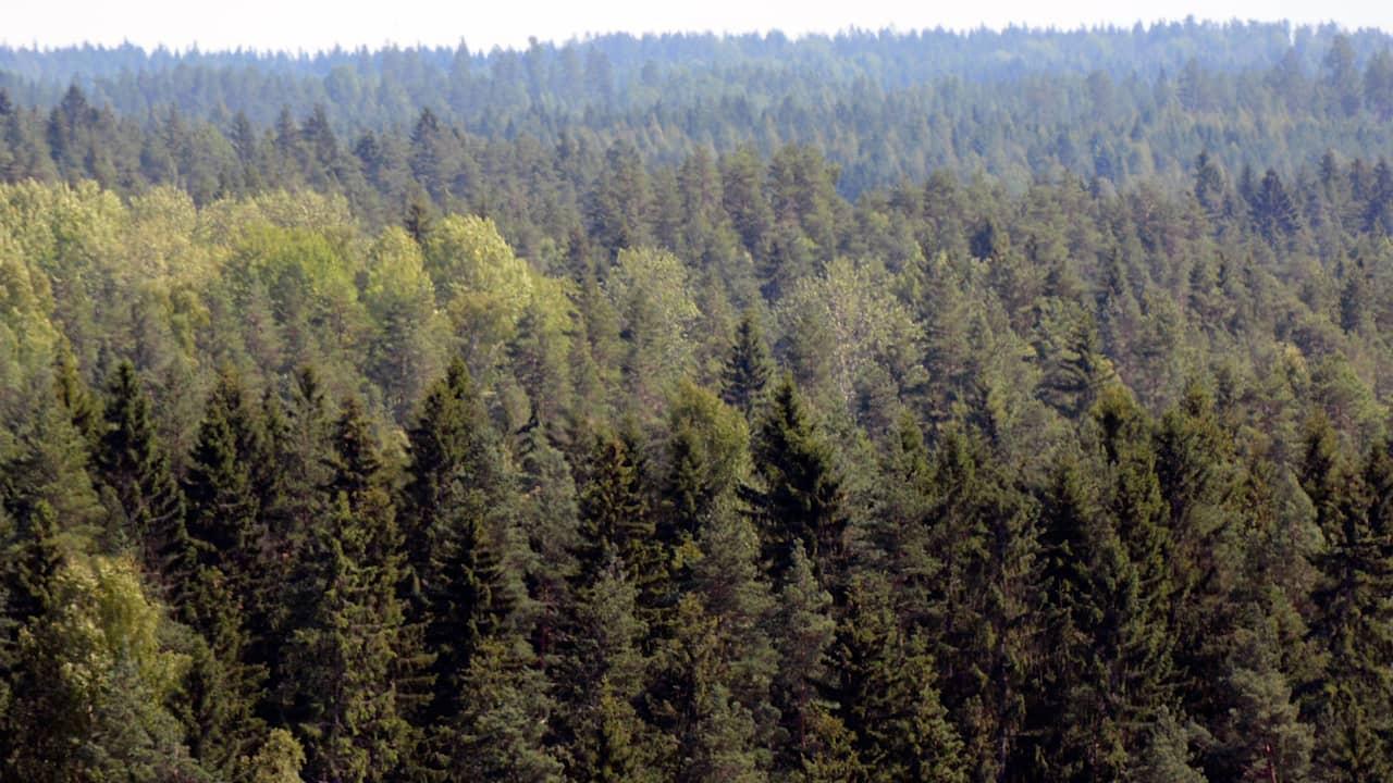 Suomen Metsät