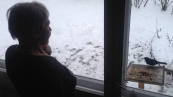 Metsäradio.: Luontodokumentteja ikkunaruudulla