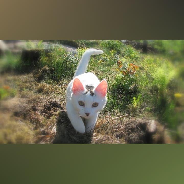 Kissan Pieru