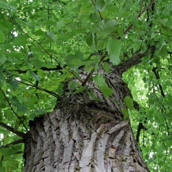Anu Hiiterä unohtaa murheensa puun latvassa