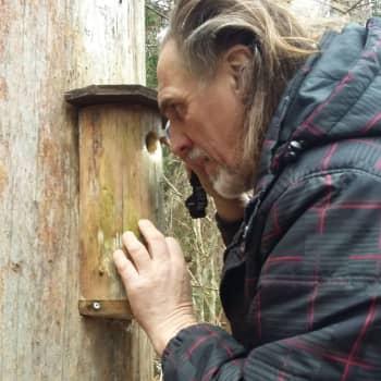 Christer Kalenius har igen allt klart för vårens häckning