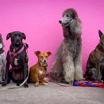 Osa 2: Ystävälliset koirat