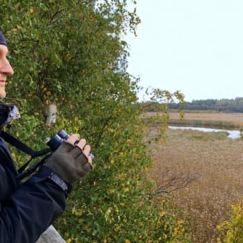Tringa ry:n suojelusihteeri pitää lintujen puolta, kun Helsingin kaupunki kasvaa