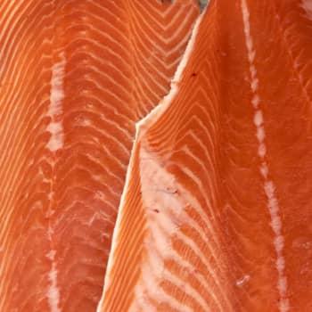 Aspekti: Sydän tykkää rasvaisesta kalasta ja camelinaöljystä