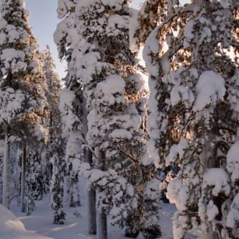 Metsäradio.: Millaisia ovat suomalaisten metsäsuhteet?