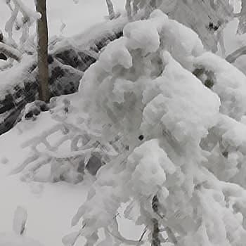 Minna Pyykön maailma: Lunta ja lumitutkimusta