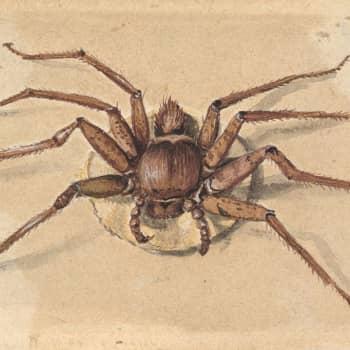 Hämähäkinseitistä voi rakentaa ihan mitä tahansa - vaikka universumin!