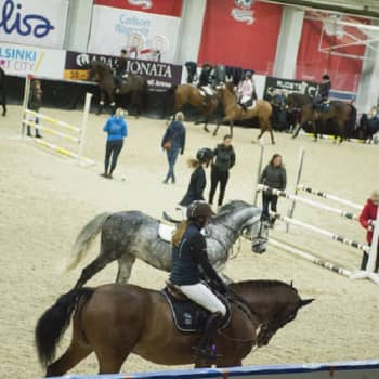 YLE Helsinki: Helsinki Horse Shown eläinlääkintäryhmä huolehtii kilpahevosista koko kisaviikon ajan