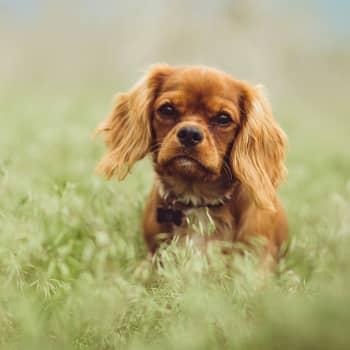 Filosofi Elisa Aaltola: Eläinvideot opettavat empatiaa