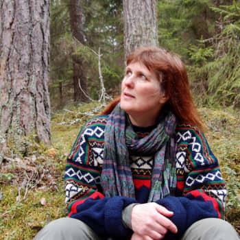 Radio Suomen Iltaohjelma: Metsä hoitaa mieltä