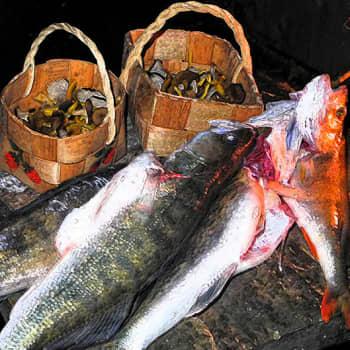 Luonto-Suomi.: Luonto-Suomen kalaruokailta