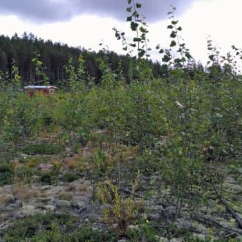 Tiedeykkönen: Suomessa on yli 25 000 saastunutta maa-aluetta, miksi tietokanta niistä ei ole julkinen?