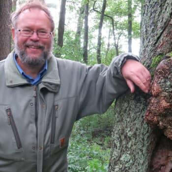 Minna Pyykön maailma: Hämmästyttävät sukulaisemme puut
