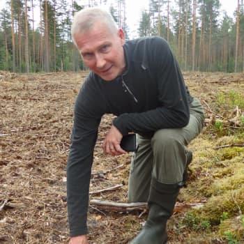 Metsäradio.: Monimuotoista metsänhoitoa