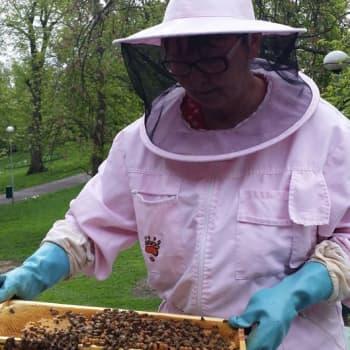 Puheen Iltapäivä: Mehiläispesän kiehtova elämä
