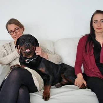 YLE Tampere: Kuinka koiranpennut tehdään?