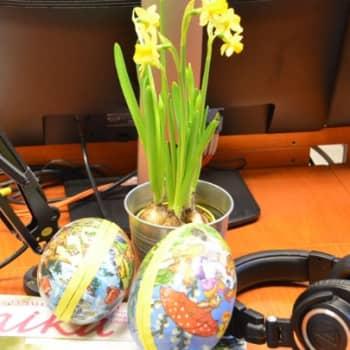 Puheen Iltapäivä: Anu Harkki: Pääsiäiseeni kuuluvat narsissit ja värjätyt munat