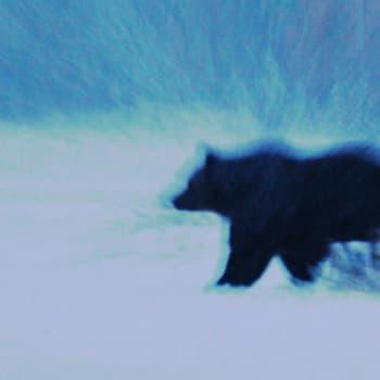 Luonto-Suomi.: Eläinunet