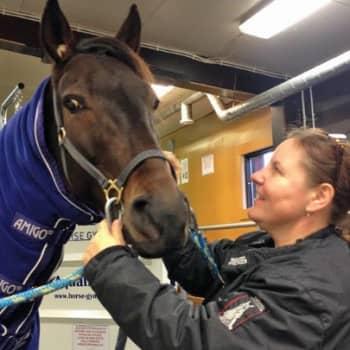 Yövieras: Susanna Packalen on hevosihminen henkeen ja vereen