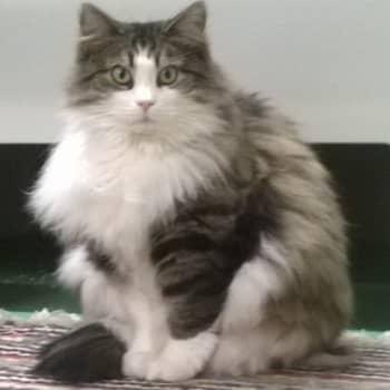 Puheen Iltapäivä: Talkootöissä Kissakoti Kattilassa