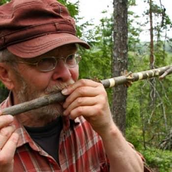 Metsäradio.: Pajupilli syntyy nopeasti
