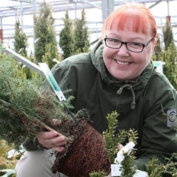 Puutarhan vuosi: Elinvoimaisen taimen tunnistaa vahvoista juurista