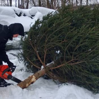 Metsäradio.: Mäntyniemen joulukuusi
