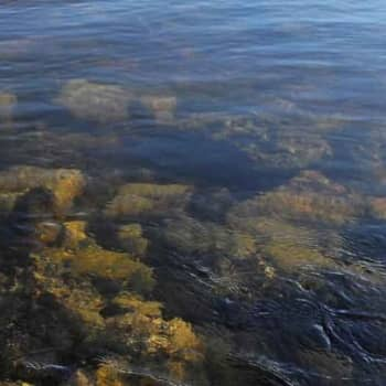 Luonto-Suomi.: Luonto-Suomen vedenalaisilta