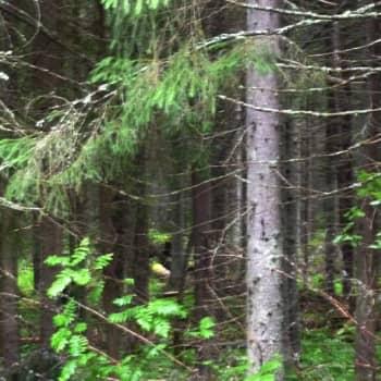 Puheen Päivä: Metsän armoilla
