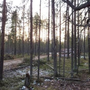 YLE Kainuu: Hossan retkeilyalueella riittää tutkittavaa