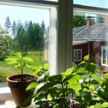 YLE Puheen Iltapäivä: Anna nurmikolle uusi elämä