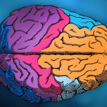 Työelämän muutokset haastavat aivoja