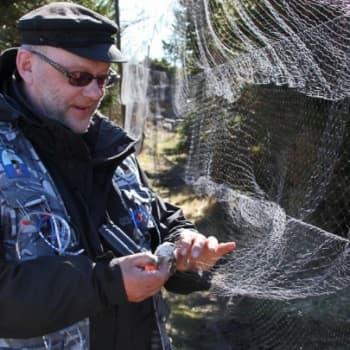 Luontoretki.: Rengastaja Tatu Hokkanen