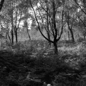 Luontoretki.: Yöllä Sjunbyn kartanolla
