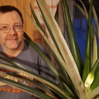 Ahti sai kasvatettua oman ananaksen - toivakkalaisen viherpeukalon sinnikkyys palkittiin